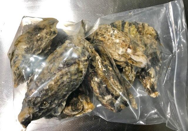 ジップロックに入れた殻付き牡蠣