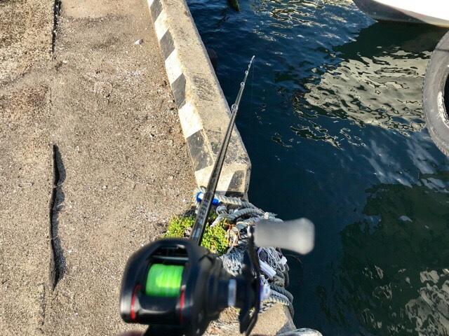 岸際でタコ釣り