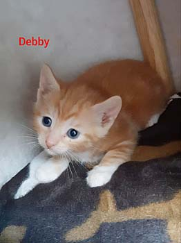 debby20-text