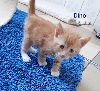 dino20-text
