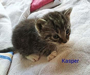 kasper20