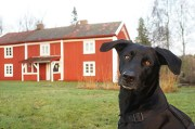 leila-z-winter2011haus