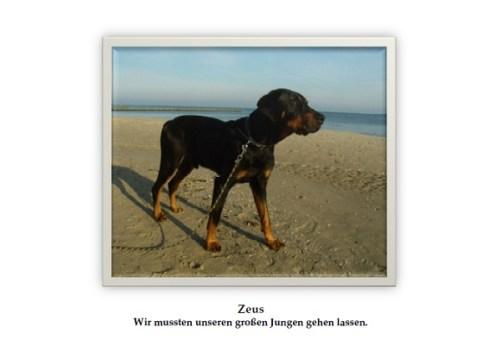 zeus-nachruf-bild
