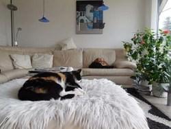 katja-z-sofaschlaf