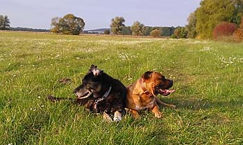 angie-rb-zweihunde