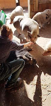pigs19-hannibal-sandra-kraulen
