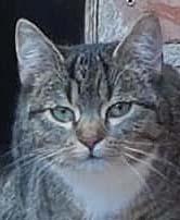 Katzen Übersicht