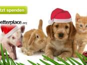 """""""Moos"""" unterm Weihnachtsbaum für Futter, Heu & Späne"""