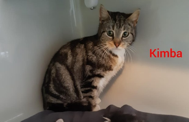 Kimba (Freigänger)