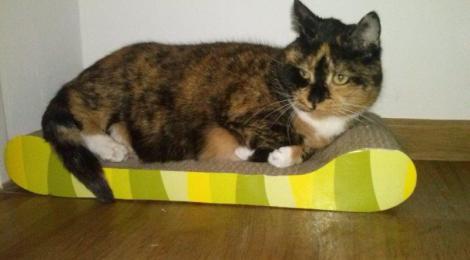 Bunte Katze Miss Marple