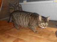 Katze in Brobergen zugelaufen!
