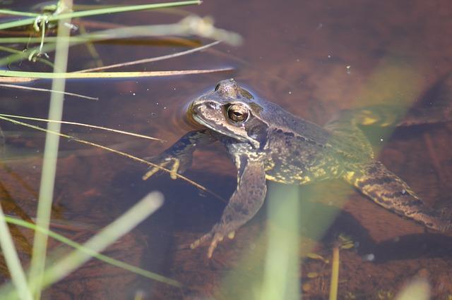 upoznavanje žaba tallinna dating