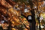 leftover autumn colourssss