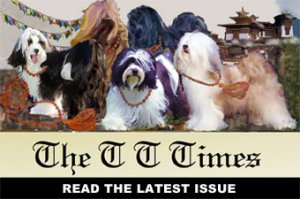 TT Times cover photo - several dogs