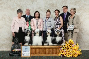 Best Stud Dog winner photo with judge and handlers