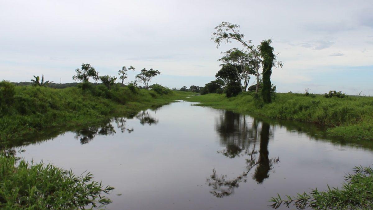 Nariva An Under Recognised Treasure Trinidadtobago