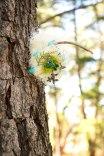Blue-birds-nest