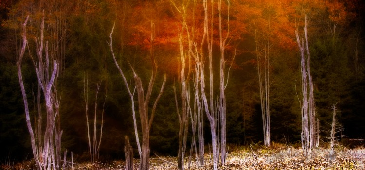 Birkshire trees 1