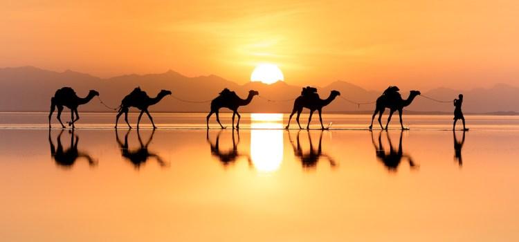 Camels © Natalia Stone