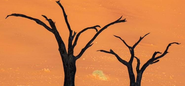 Deadvlei Camel Thorn Tree Silhouettes