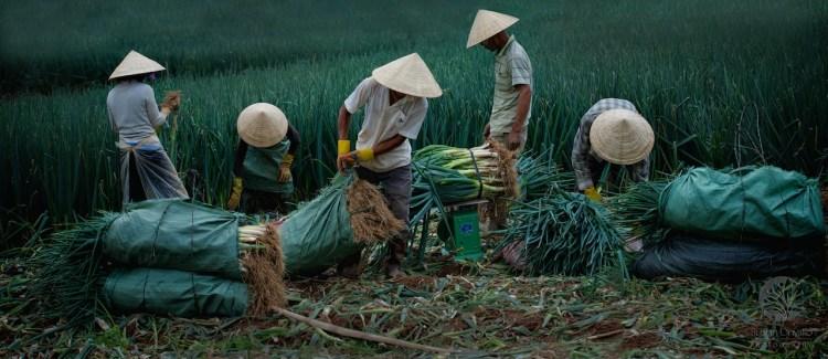 Vietnam Five