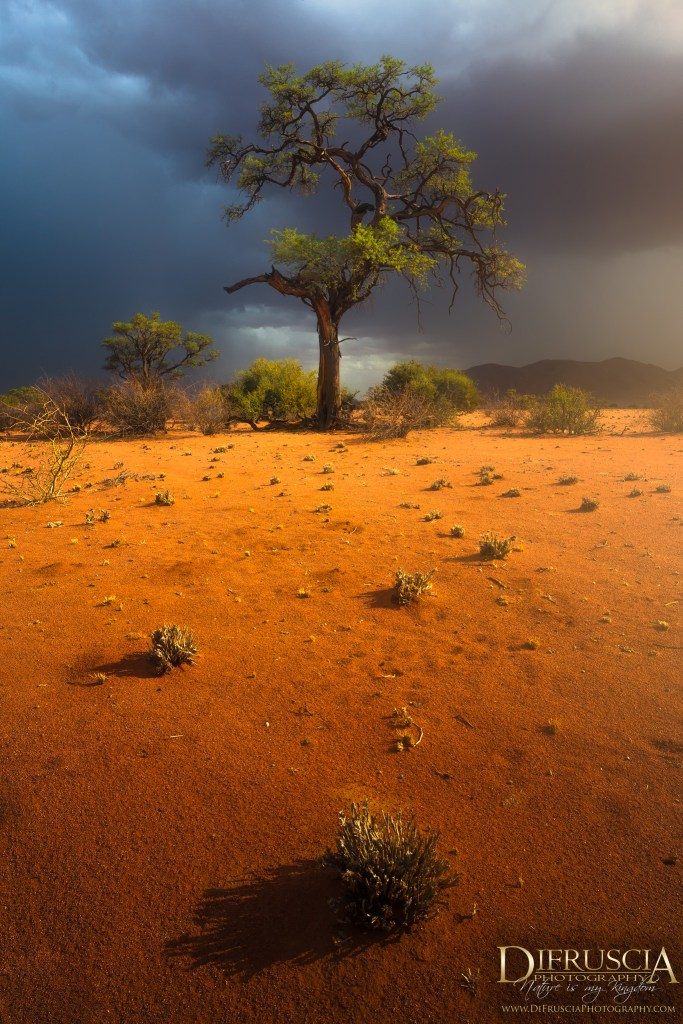 Nowhere to hide, Namibia