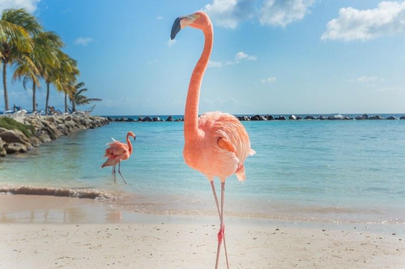 TTN Las Vegas Discover Aruba (1)