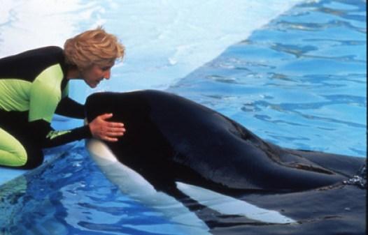 Linda Tellington Jones works with Keiko the orca whale.