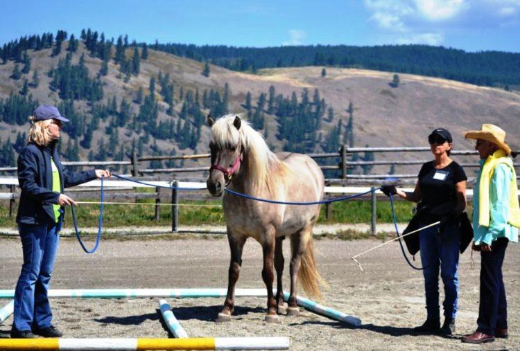 Tellington TTouch Method for horsesBee line leading position