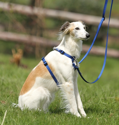 A dog wears a Tellington TTouch Harmony Harness