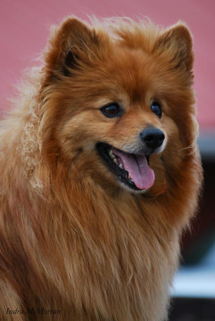 Tellington TTouch Dog
