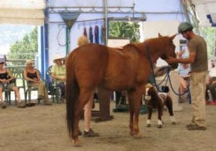Participants at a Tellington TTouch Method clinic for horses watch a lecture on saddle fit.