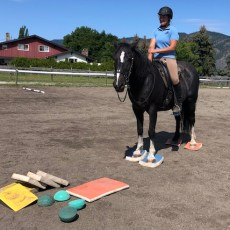 SUREFOOT Equine Stability System