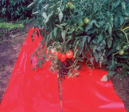 High Yield Tomato Mulch r - Qty. 36x50