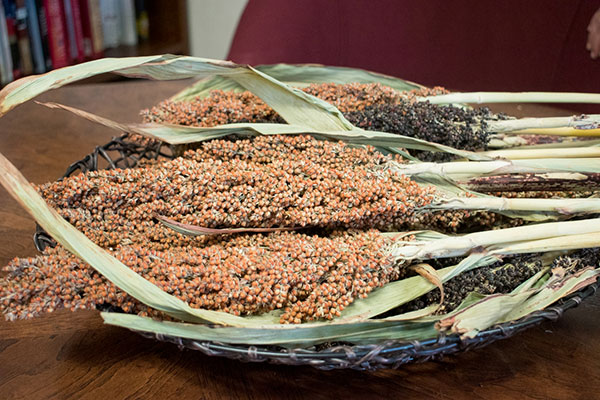 A bowl of sorghum sits on Norma Ritz Johnsons desk.