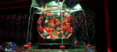 [自助旅行] 九州博多Art Aquarium,絢爛迷幻的金魚展