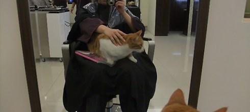 [分享] Deluxe 美髮沙龍(可以點貓咪坐檯!)