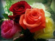 8-Rose_472673181433073894