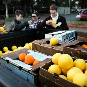 Harvesting Sacramento