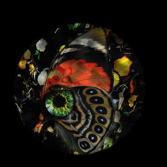 From the 'Nature Eyes' Series by Victoria Moran Sabbag.