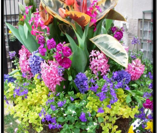 Blooms Spring Container Garden Design