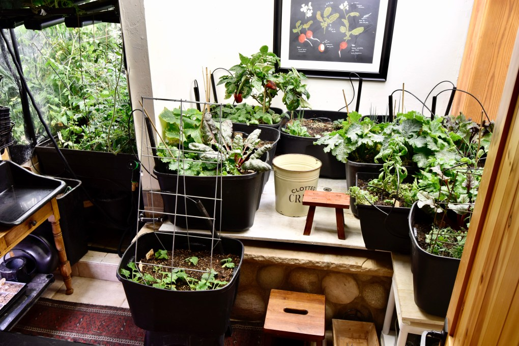 An overhead shot of the indoor garden...