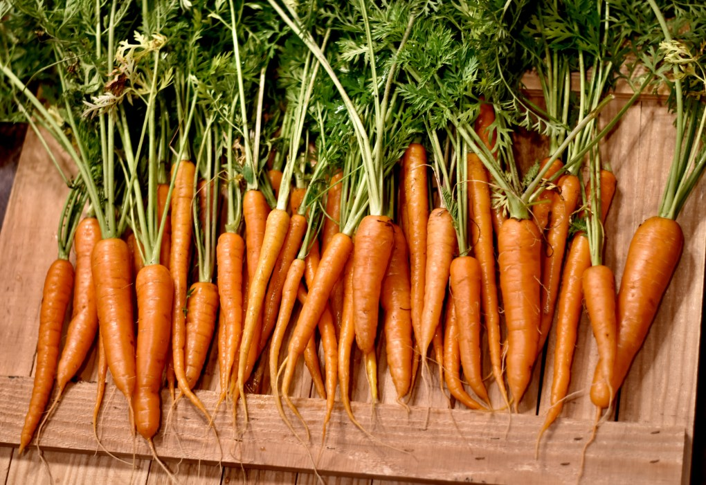 A row of darn-near perfect outdoor grown carrots.