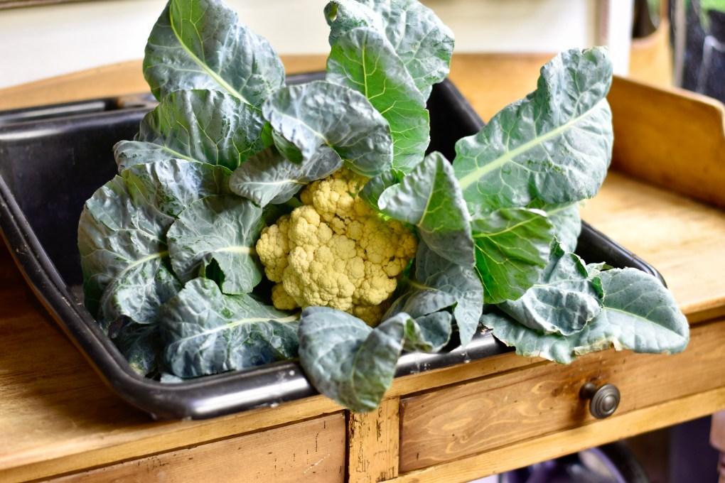 Indoor grown cauliflower