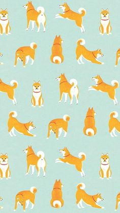 Shiba Inu Cute Desktop Wallpaper 柴犬がいっぱいiphone壁紙 Wall めちゃ人気 Iphone壁紙dj