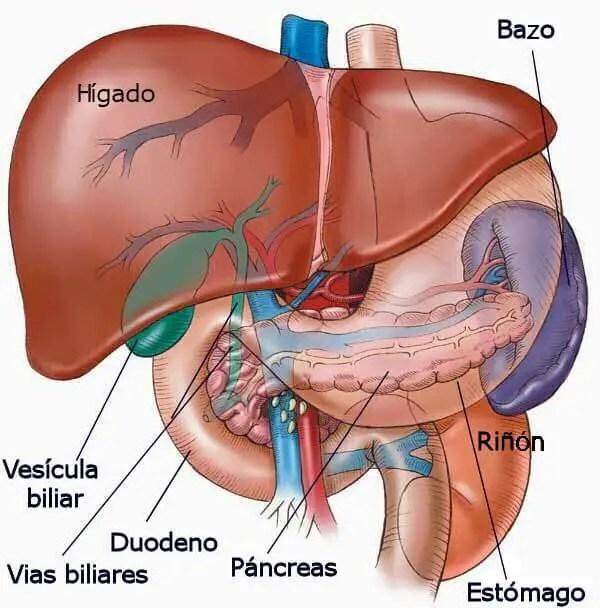 Perfil Hepatico Interpretacion