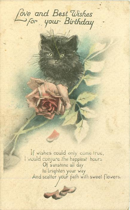 LOVE AND BEST WISHES FOR YOUR BIRTHDAY Black Cat Rose TuckDB