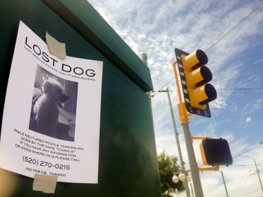 A flier about a lost dog.