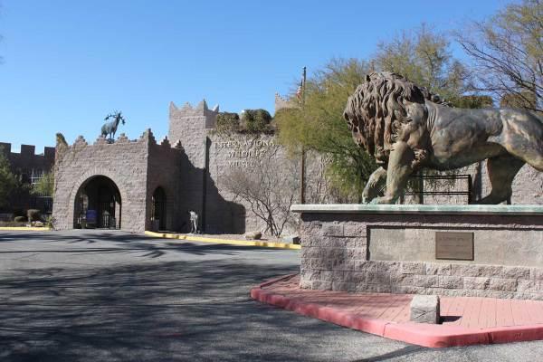 International Wildlife Museum - Tucson Attractions