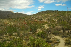 La Milagrosa Trails